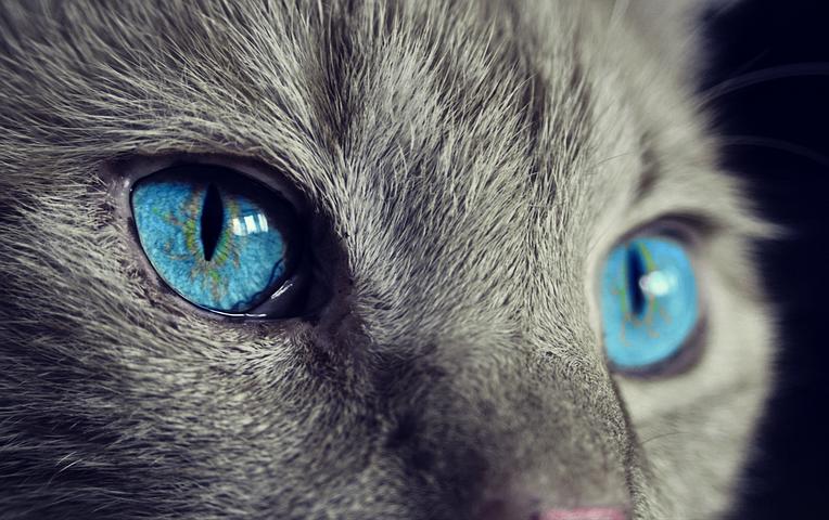 cat-1285634__480